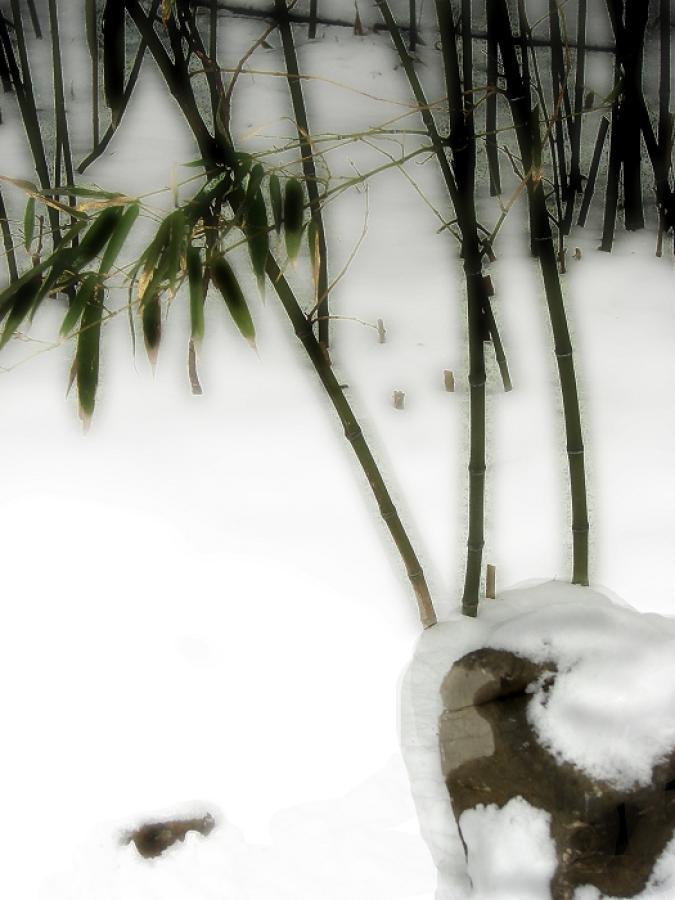 http://img.pop-photo.com.cn/myspace/image/2009/11/0/2/80/28043_1783095568.jpg