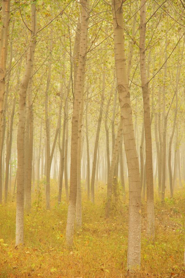 森林怎么调最低配置