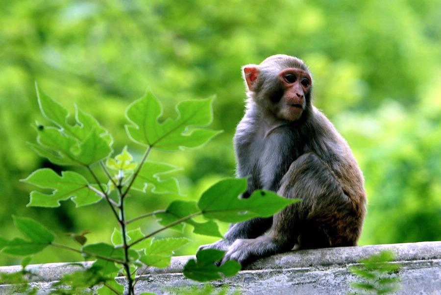 〔博泉作品〕黔灵山猴子的幸福生活(二)—大众摄影网