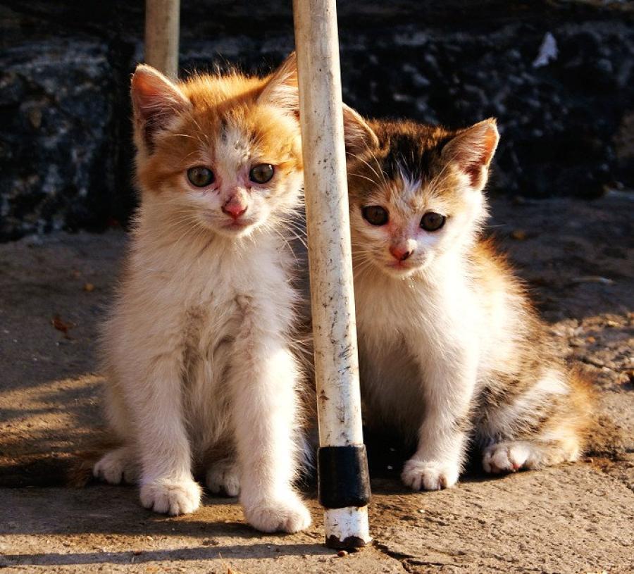 〔眼睛蛇作品〕双胞胎猫咪—大众摄影网