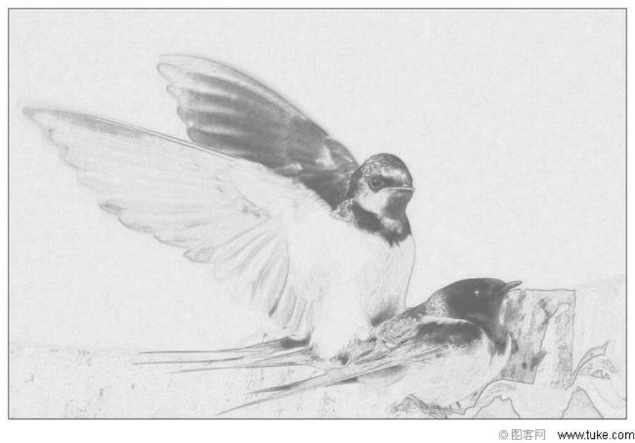 铅笔手绘图片鹰
