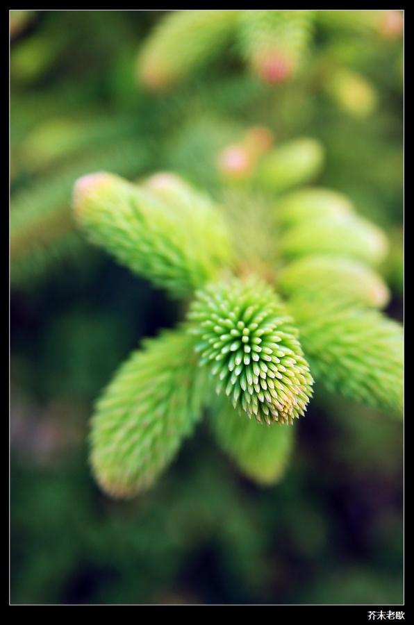 〔芥末老歇作品〕绿色植物