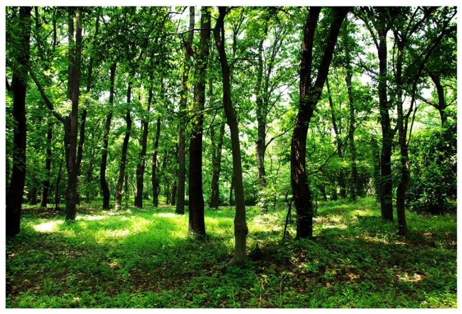 森林窗外风景贴图