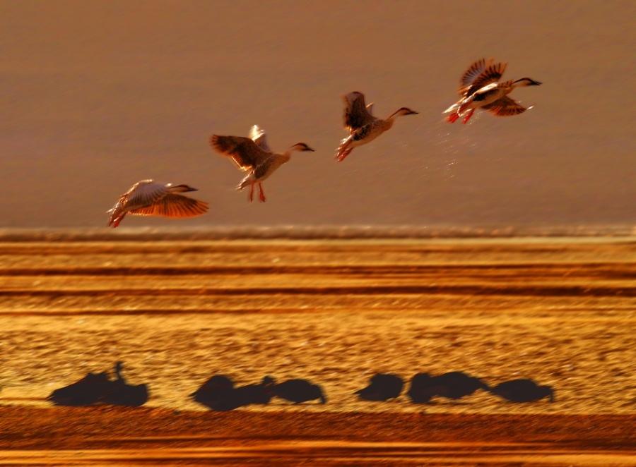 鸿雁——林媚 - 漫天雪 - 一个人去看海