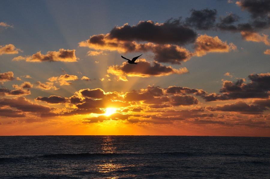 >> 文章内容 >> 描写海上日出的作文400字  描写海边日出的句子答