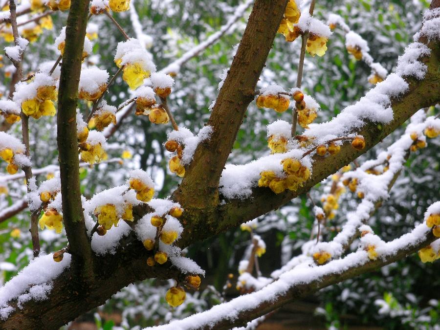 寒梅傲雪头像 > 青松傲雪