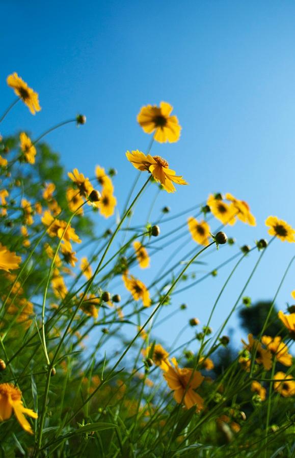 美丽的婴孩歌谱-种太阳_幼儿999-种太阳 种太阳歌词 种太阳儿歌