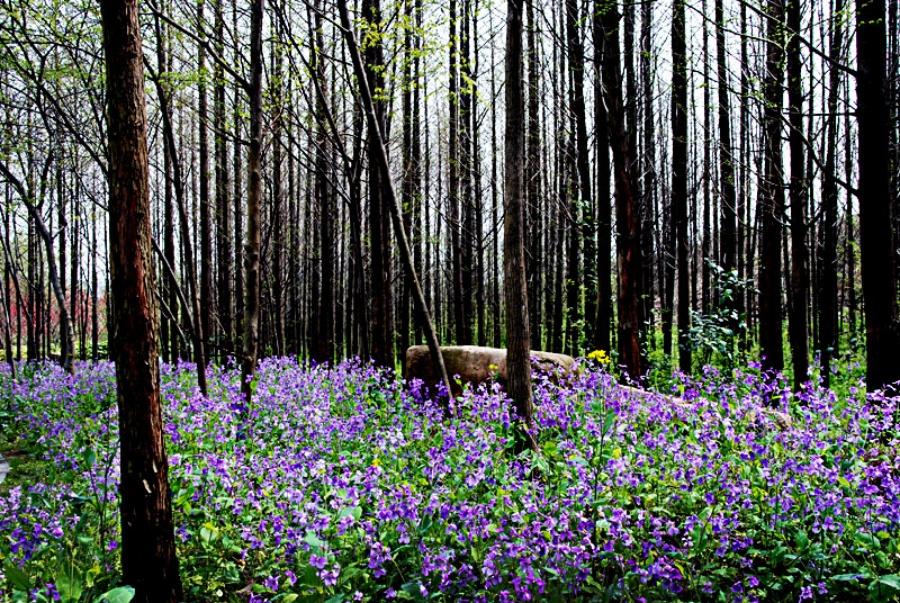 小树林的春天 - 剪纸娃娃 - 剪纸刘柄辰的博客