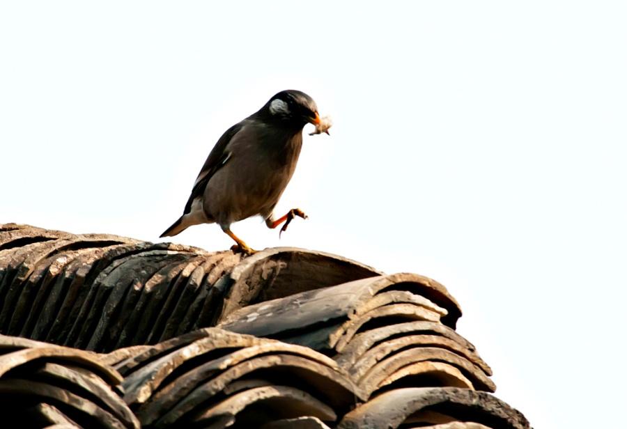 筑巢最厉害的动物