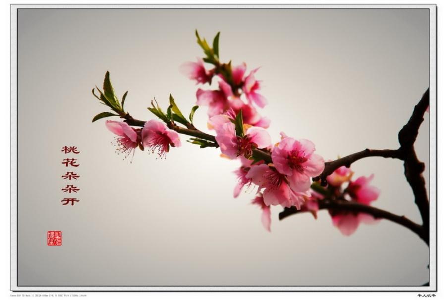 〔牛人吹牛作品〕桃花朵朵开—大众摄影网