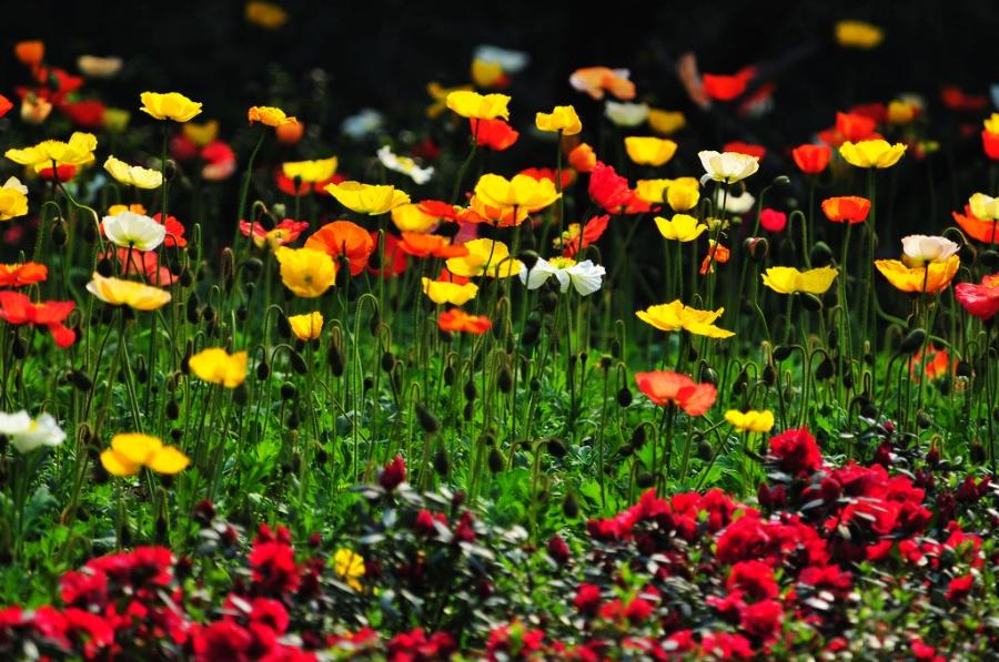〔鸿雁南飞作品〕春天的色彩—大众摄影网