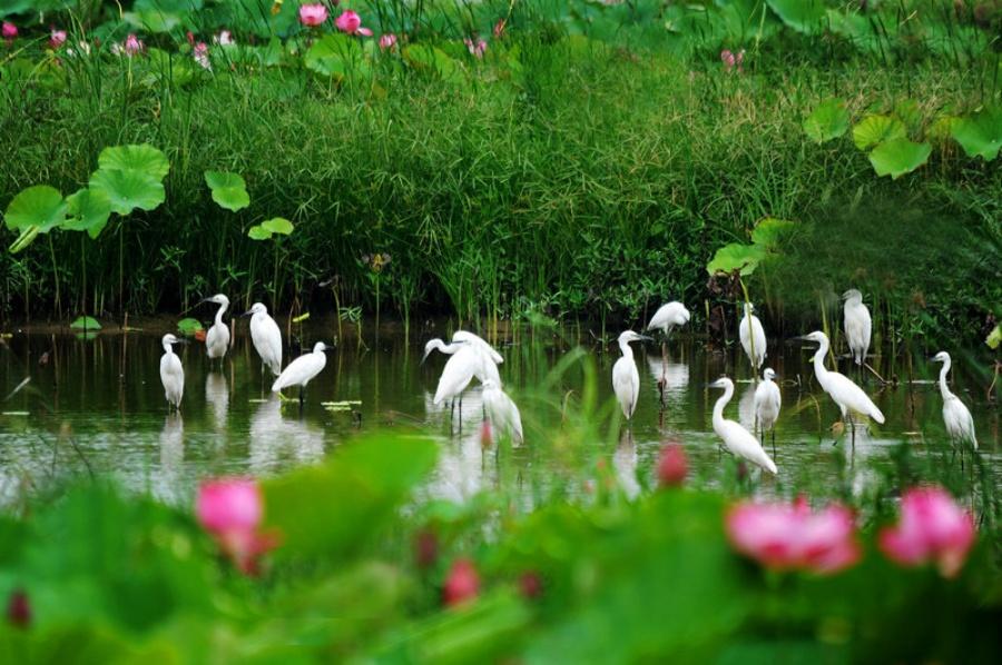 微山湖-中国荷都 - 海阔山遥 - .
