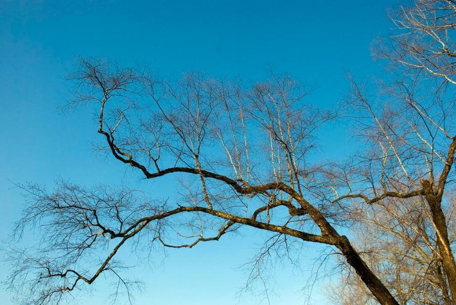 冬天的树简笔画_冬天的树枝简笔画