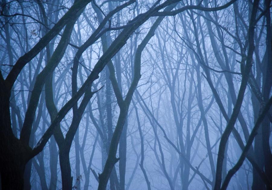 〔ah大树作品〕密林—大众摄影网