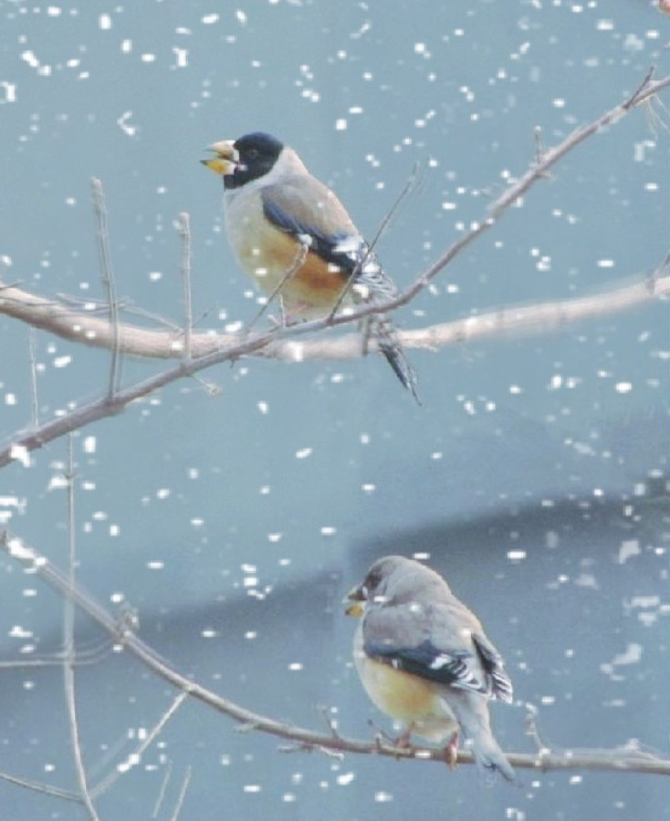 动物 鸟 鸟类 734