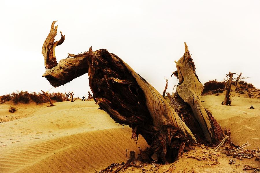 〔青松001作品〕怪树—大众摄影网