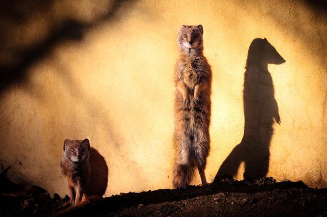 有趣的动物照片来自山脉
