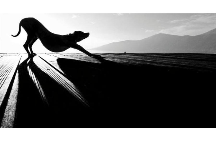 〔大众影赛〕精彩绝伦的动物摄影作品—大众摄影网